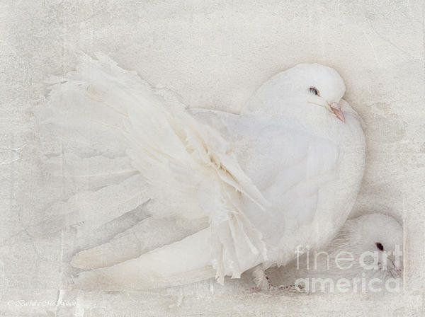 Barbara McMahon - Peaceful Existence Print