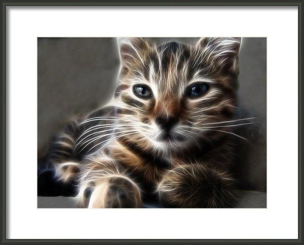 Tilly Williams - Kitten Print