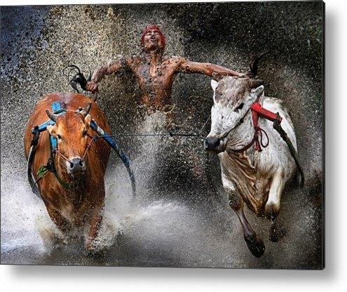 Wei Seng Chen - Bull race Print