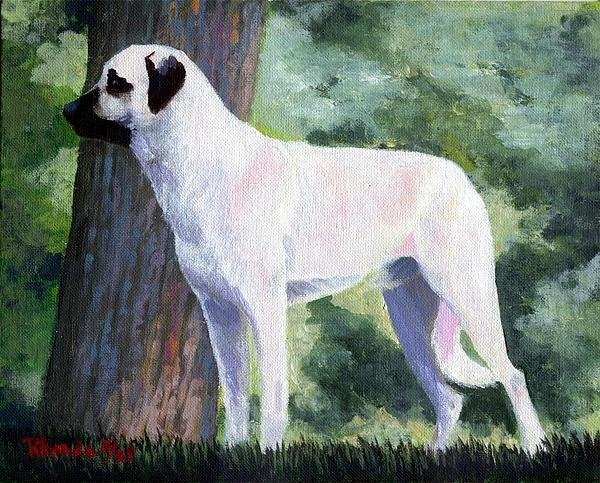 Olde Time  Mercantile - Anatolian Shepherd Dog Print