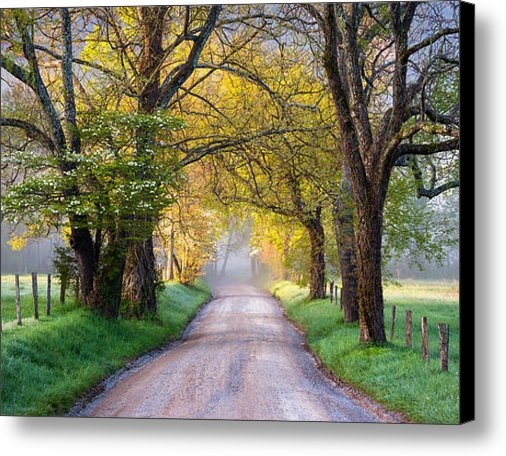 Dave Allen - Cades Cove Great Smoky Mo... Print