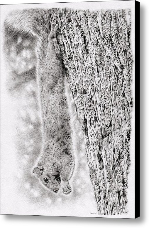 Heidi Vormer - Dangling Squirrel Print