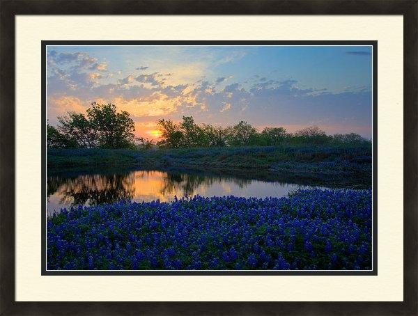 Mark Alder - Texas Bluebonnets Print