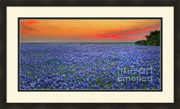 Jon Holiday - Bluebonnet Sunset Vista -... Print