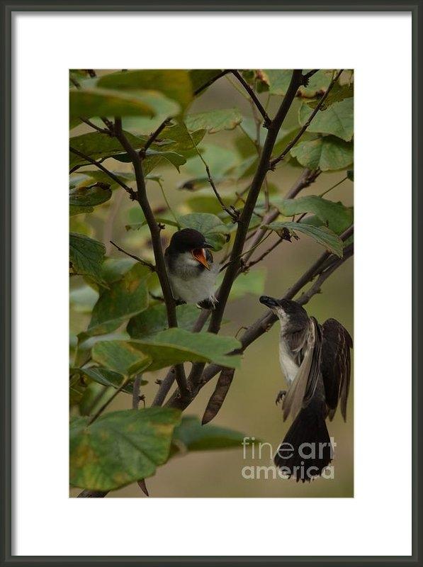 Gordon  Allen - Kingbirds sharing a berry Print