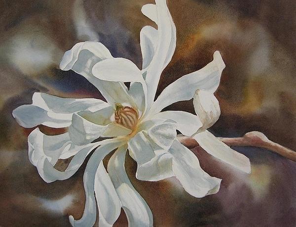 Sharon Freeman - White Star Magnolia Bloss... Print