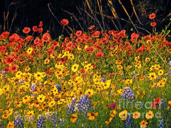 Joe Jake Pratt - Exuberant Spring Print