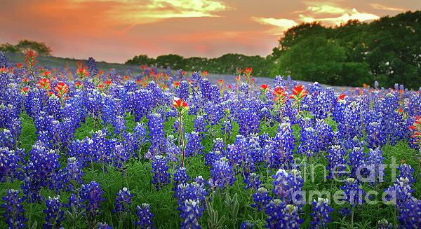 Jon Holiday - Springtime Sunset in Texa... Print