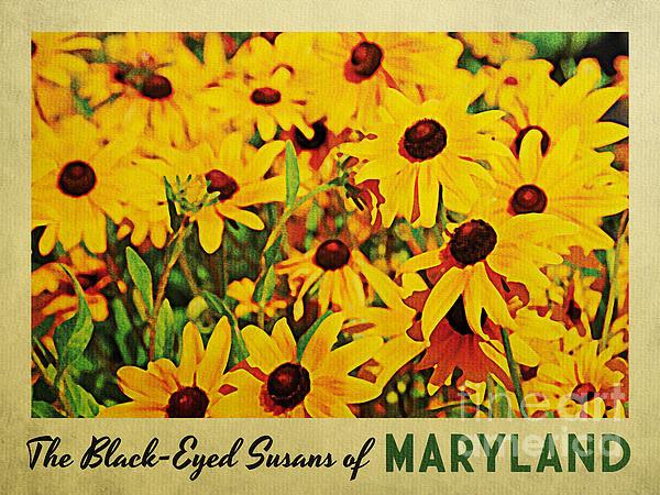 Flo Karp - Maryland Black-Eyed Susan... Print