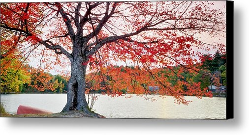 Aron Kearney Photography - This Tree on Fire Print
