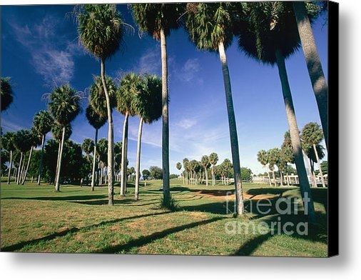George Oze - Palms of  Point Borinquen... Print