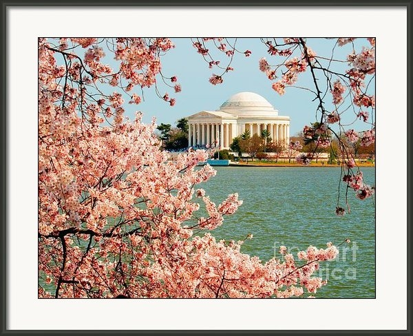 Nick Zelinsky - Cherry Trees at the Jeffe... Print