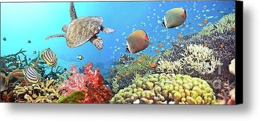 MotHaiBaPhoto Prints - Underwater panorama Print