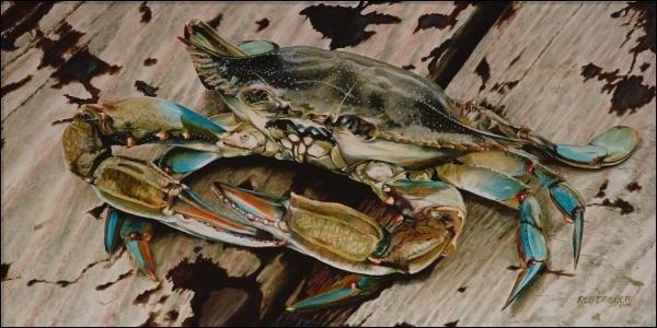 Rob Dreyer AFC - Portrait of a Blue Crab Print