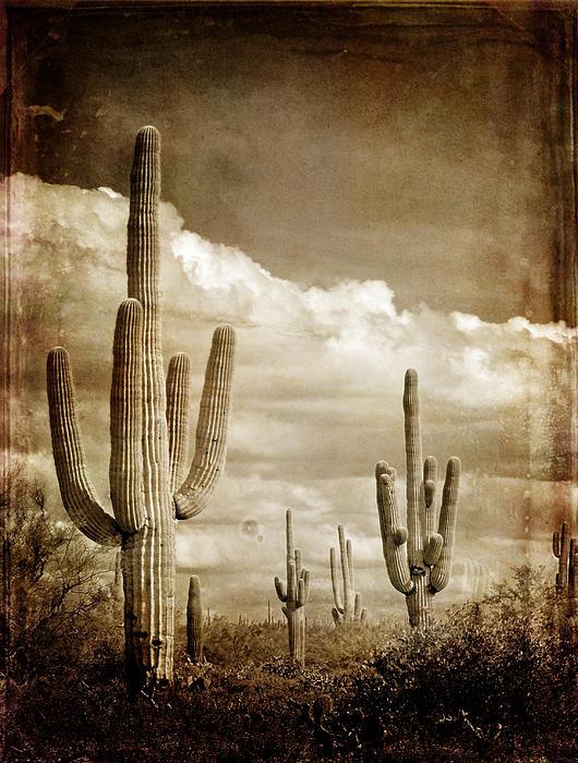 Lane Erickson - Old Photograph of Cactus Print