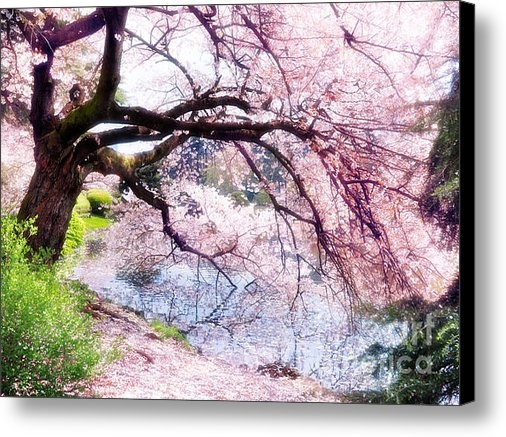 Oleksiy Maksymenko - Blossoming cherry tree to... Print