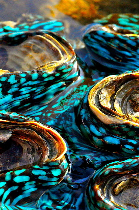 Casey Herbert - Blue Clams Print