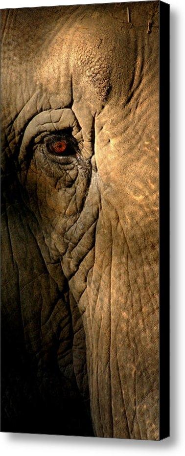 Greg and Chrystal Mimbs - Eye of the Elephant Print
