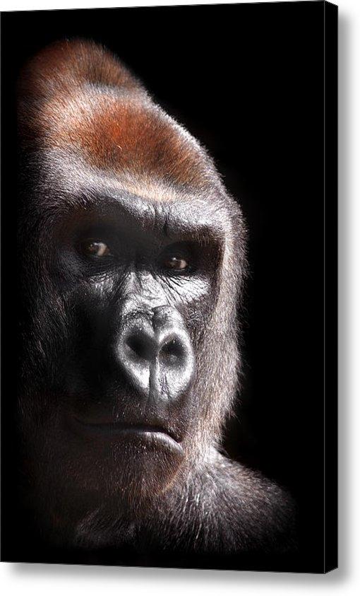 Stephie Butler - Gorilla ... Kouillou Print