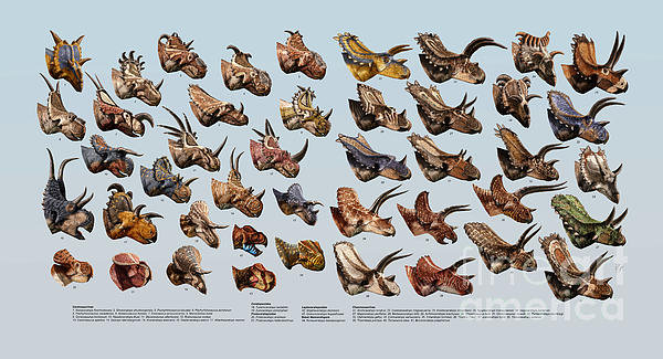 Julius Csotonyi - Ceratopsian Cornucopia Print