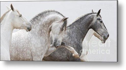 Carol Walker - The Spanish Stallion and ... Print