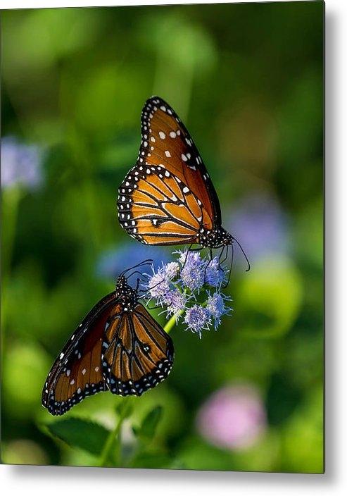 Pete Mecozzi - Lovely Butterflies Print