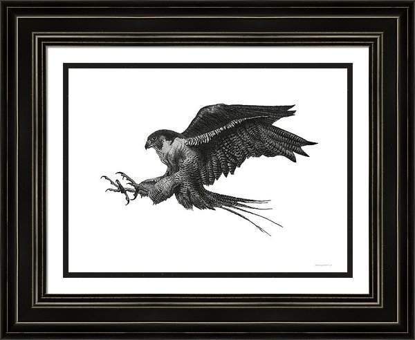 Mario  Perez - Peregrine Hawk or Falcon ... Print