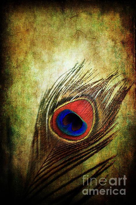 Stephanie Frey - Peacock Feather Print
