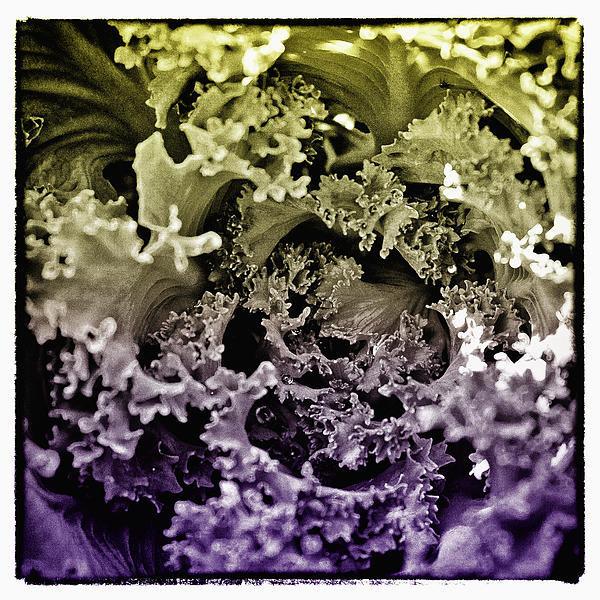 David Patterson - Kale Color II Print
