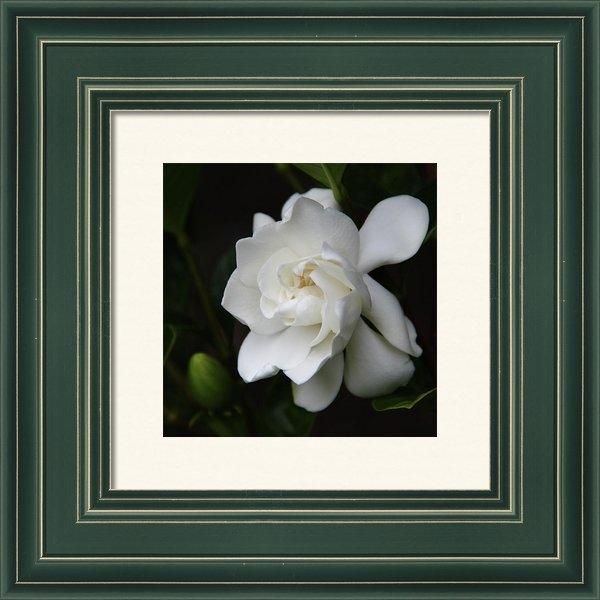 Kerri Ligatich - Gardenia - II Print