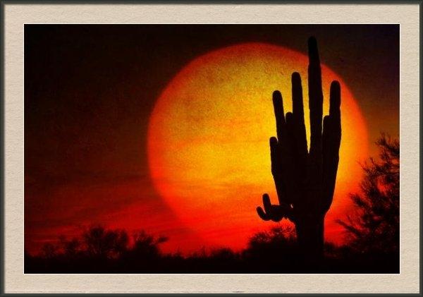 James BO  Insogna - Big Saguaro Sunset Print