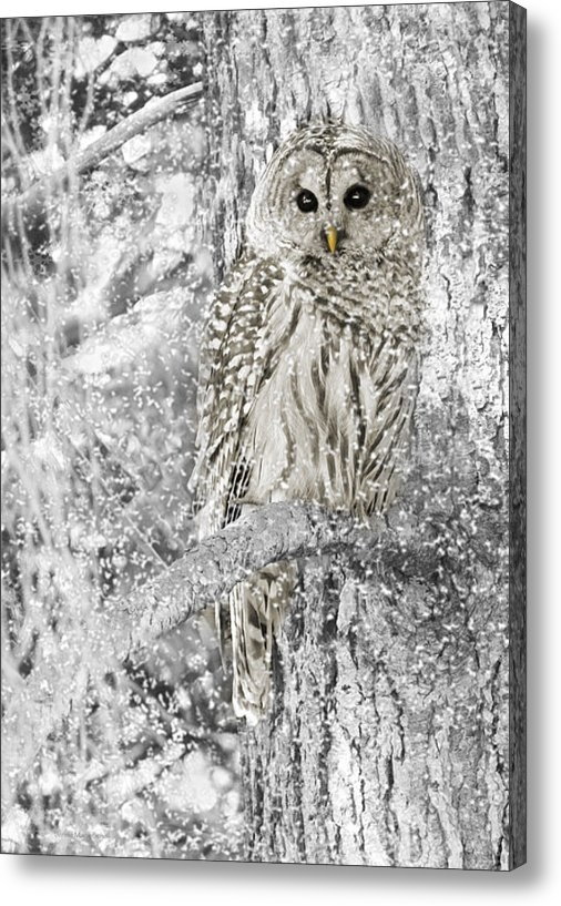 Jennie Marie Schell - Barred Owl Snowy Day in t... Print