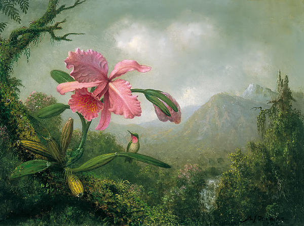 Heade - Orchid and Hummingbird Print
