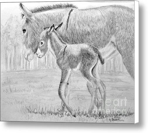 Dave Alwin - Baby Donkey Print