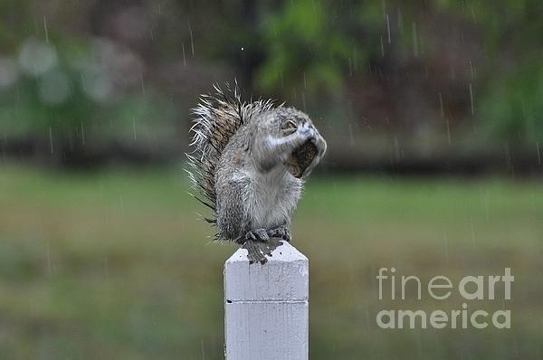 Krista Hott - Raindrops Keep Falling on... Print
