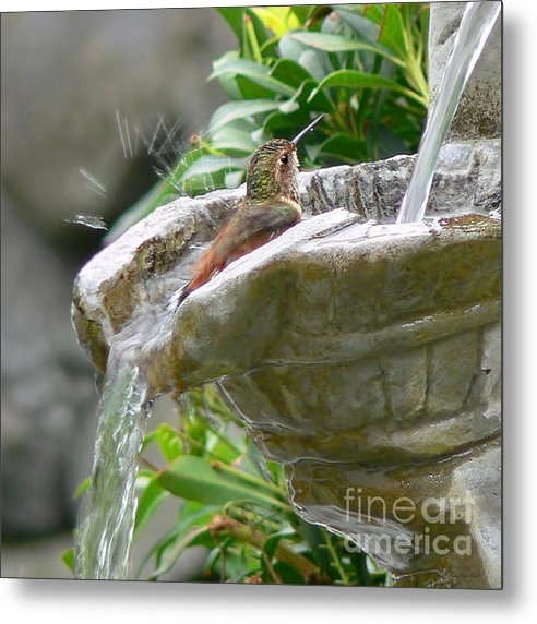 Jennie Marie Schell - Hummingbirds Do Take Bath... Print