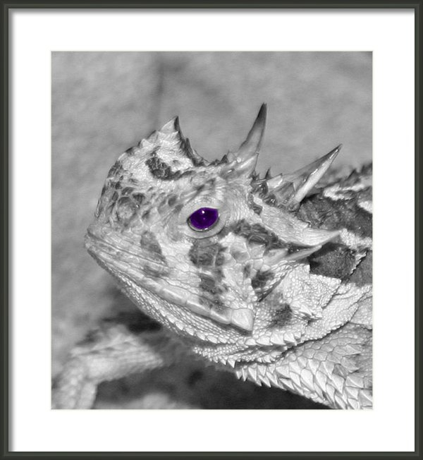 Dawn Edwards - Horned Frog Purple Eye Print