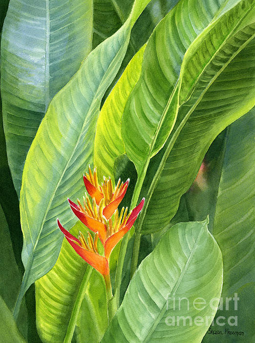 Sharon Freeman - Red and Gold Heliconia Print