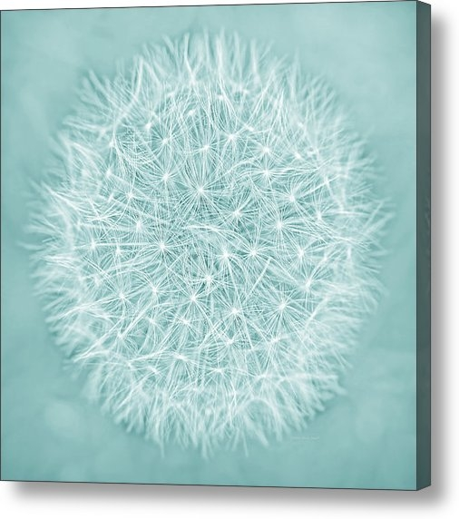 Jennie Marie Schell - Dandelion Macro Abstract ... Print