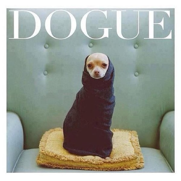 Matheo Montes - 😂😂😂😂 #dogue #... Print