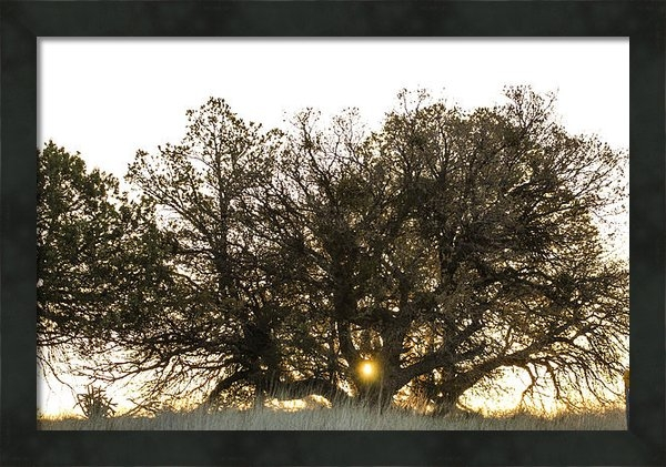 Renny Spencer - Sunrise Captured 4-16-201... Print