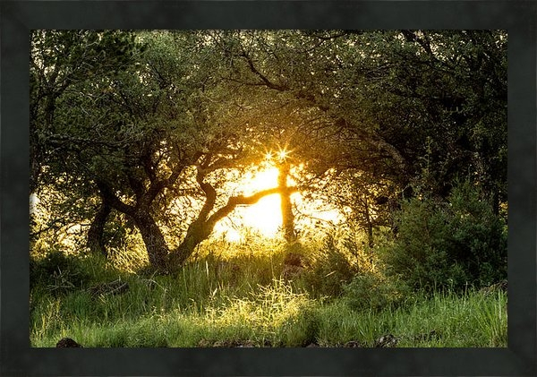 Renny Spencer - Sunrise in Natures Window Print
