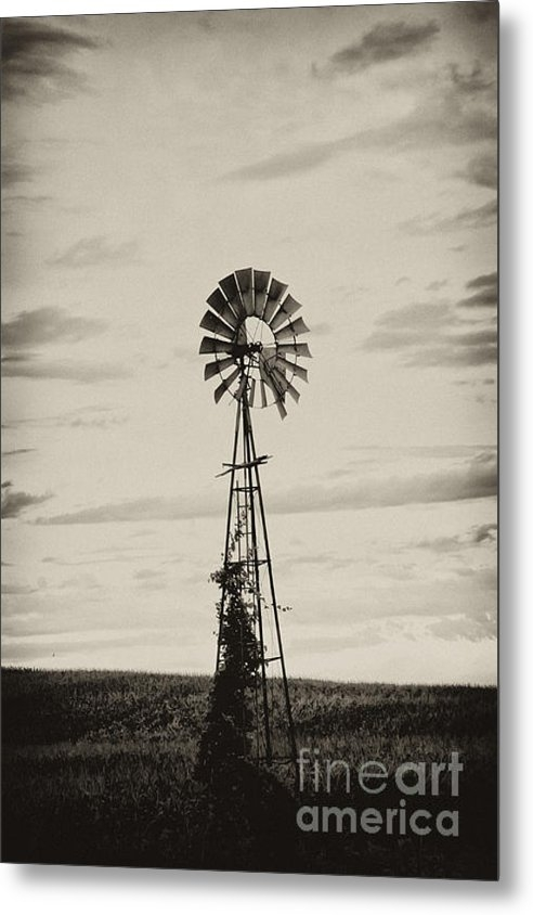 Wilma  Birdwell - Iowa Windmill In a Corn F... Print