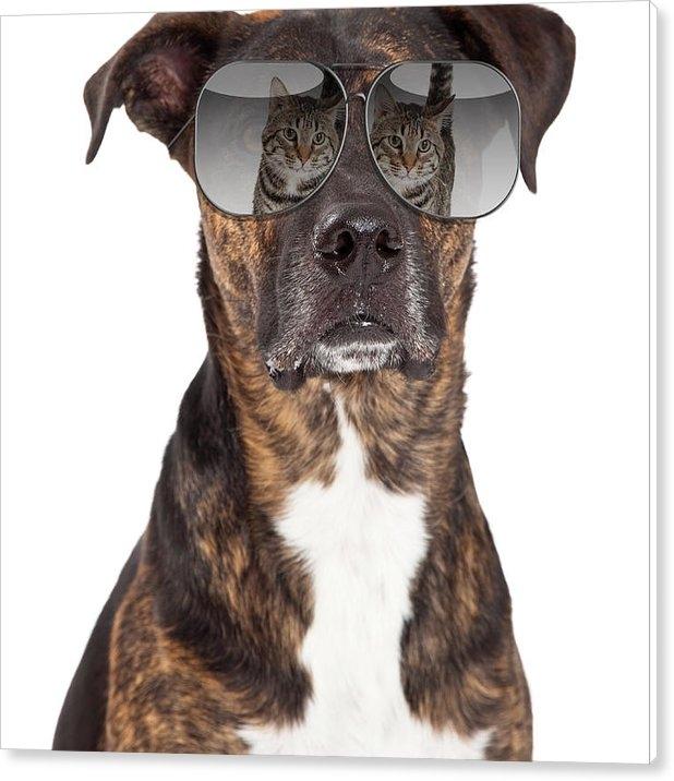 Susan Schmitz - Funny Dog With Cat Reflec... Print