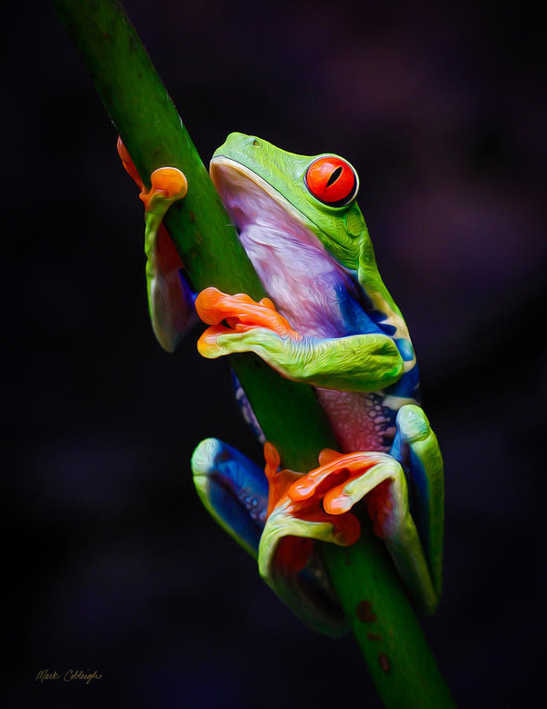 Mark Cobleigh - Red-Eyed Tree Frog OilPai... Print