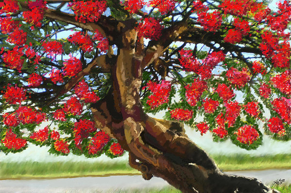 James  Mingo - Flamboyant Tree Guyana Print