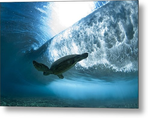 Sean Davey - Pipe Turtle Glide  -  par... Print