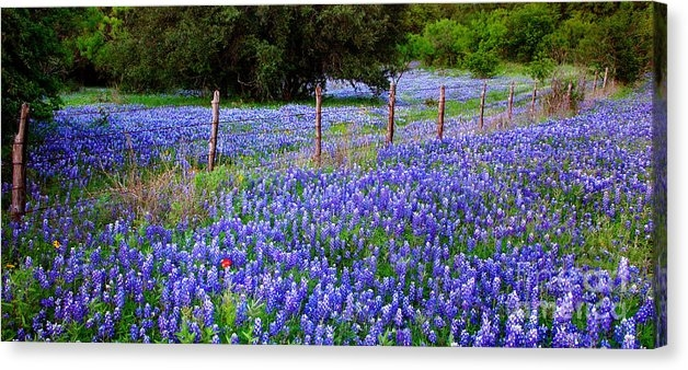 Jon Holiday - Hill Country Heaven - Tex... Print