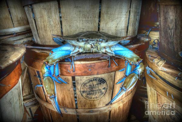 Thornton Penrose - Jimmy the Big Blue Crab Print