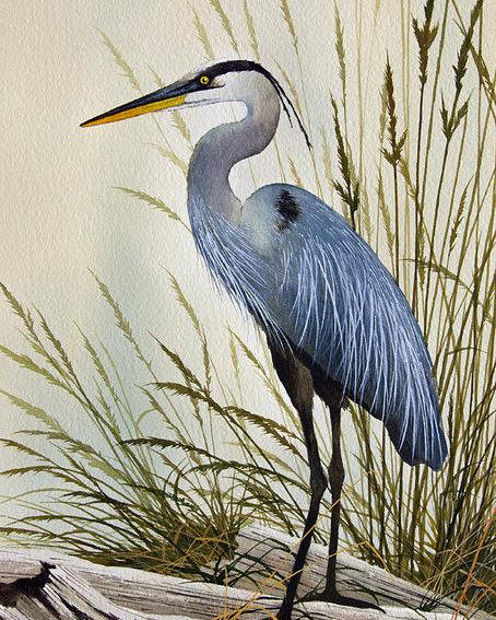 James Williamson - Great Blue Heron Shore Print